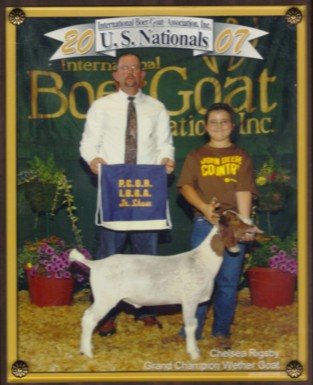 Angels Acres Show Wethers And Boer Goats