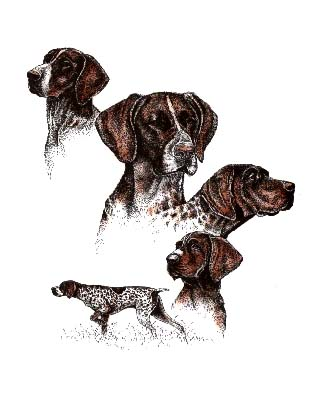 Welcome To The German Shorthair Pointer Rescue Of South Florida | Dog ...