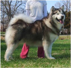 Malibu Dog Breed
