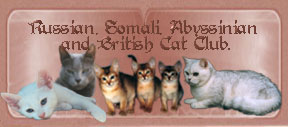 Russian Somali Abyssinian and British Cat Club