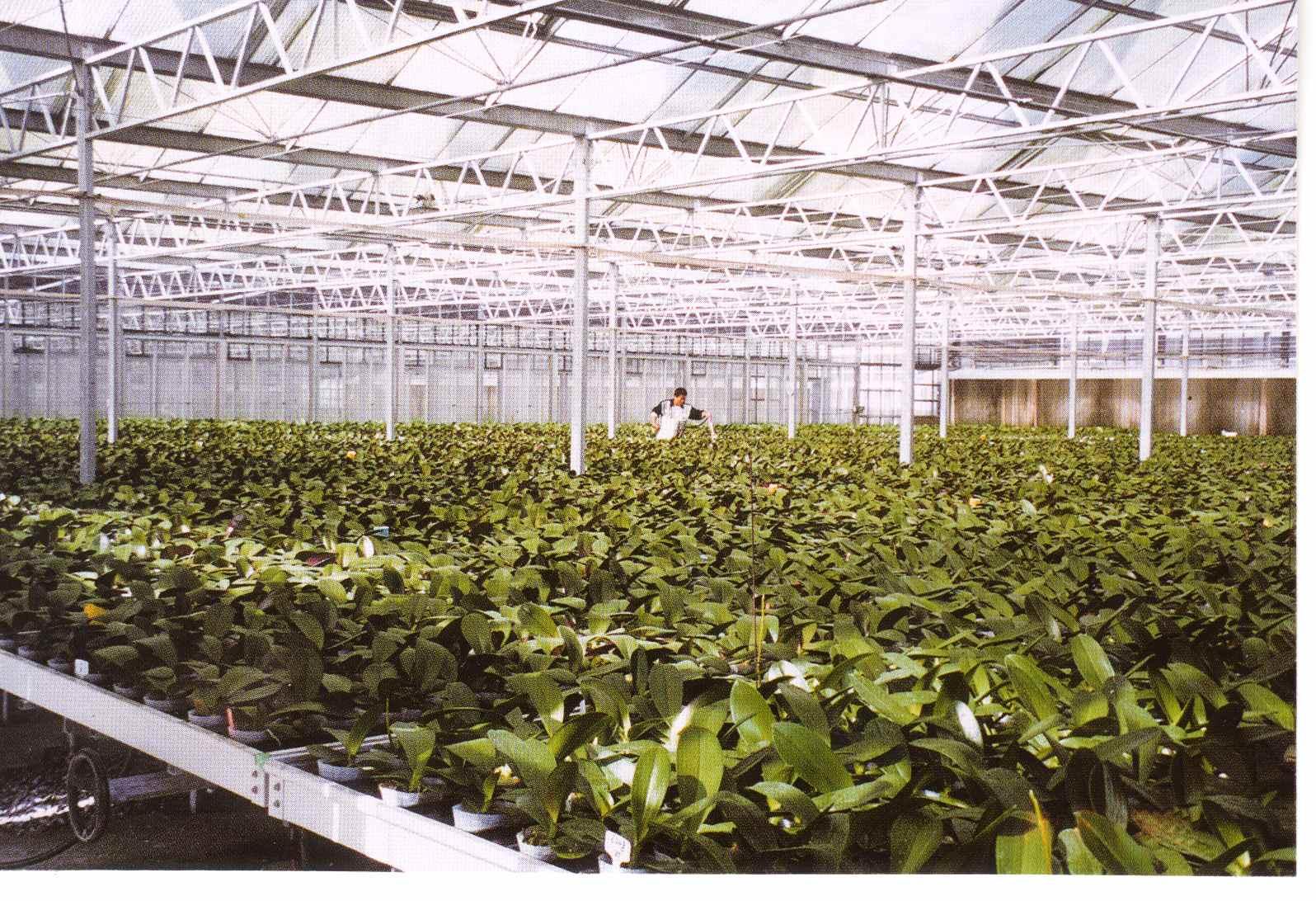 big_plant_1.jpg