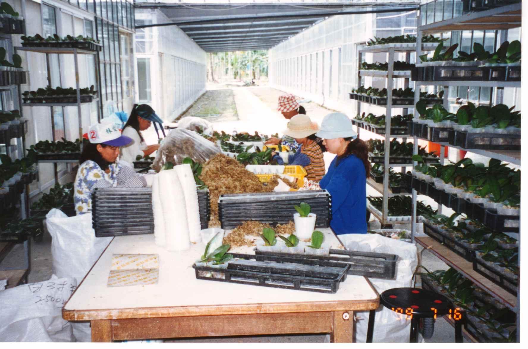 workers_planting.jpg