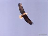 Eagles Love Owasippe!