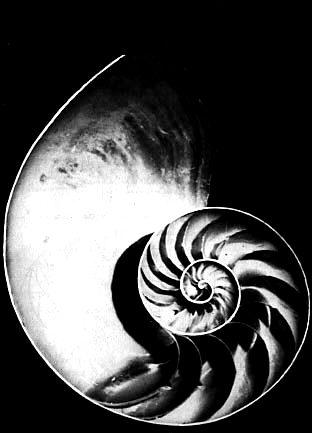[nautilus