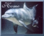 Dolphin Friends... Support the Cause