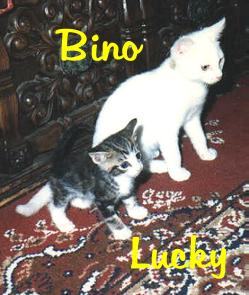 Bino and Lucky