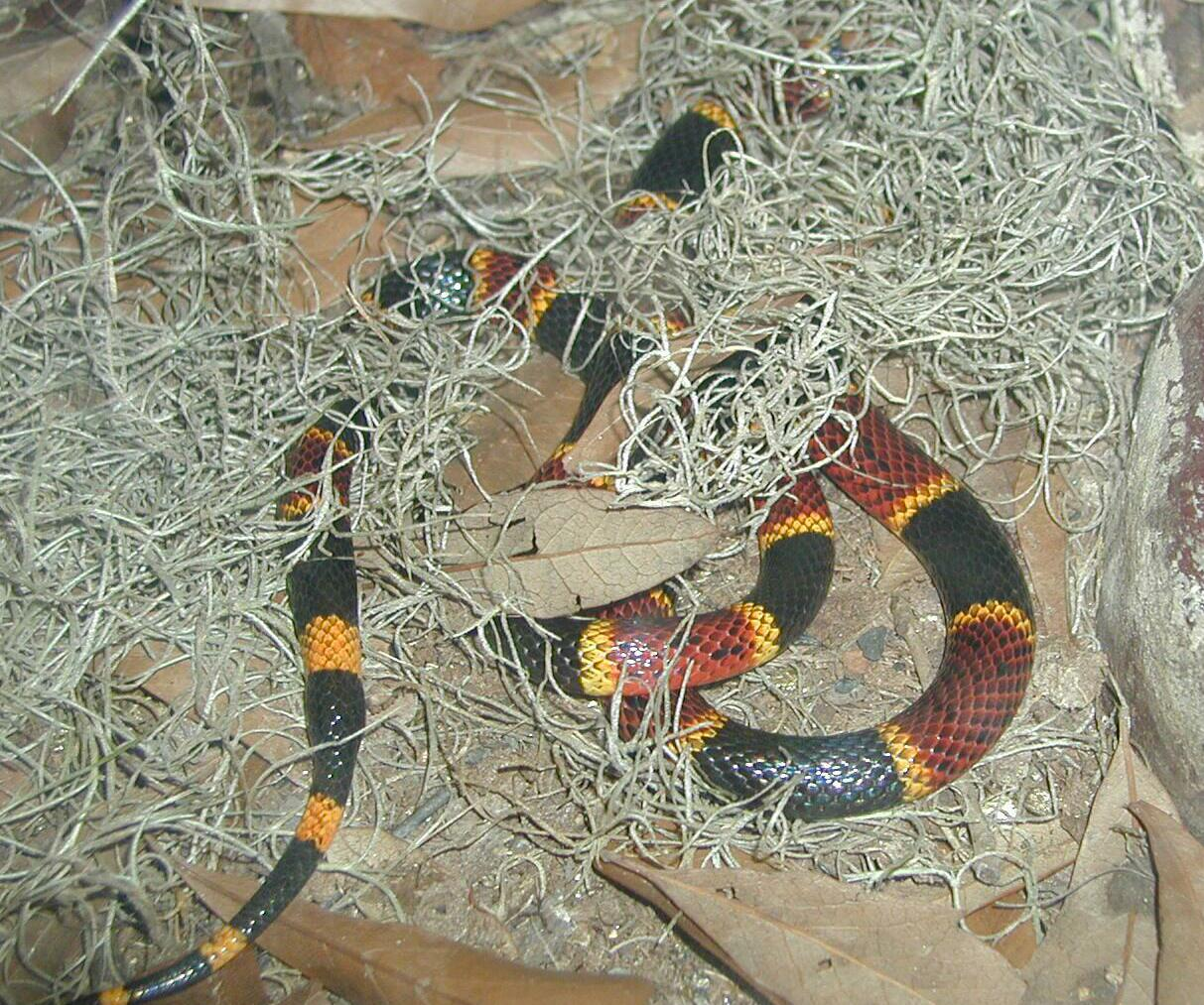 Snakes2